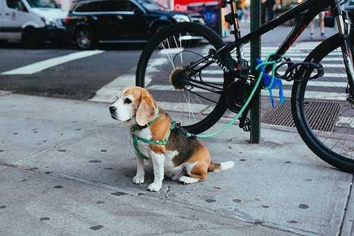 szelki-guard-dla-psow.jpg